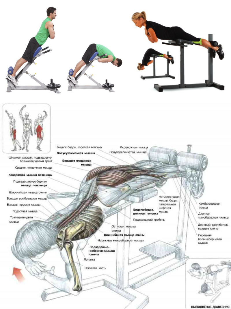 Упражнения для мышц спины: как укрепить здоровье и продлить молодость