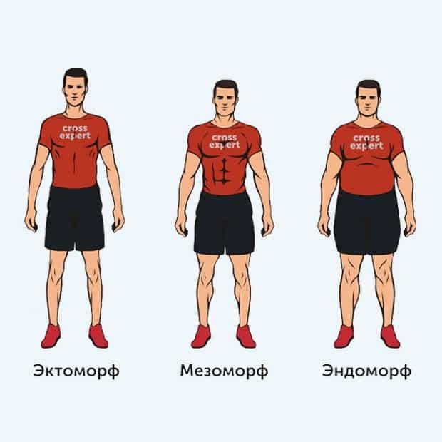 Эктоморф, мезоморф, эндоморф – типы телосложения (соматотипы по шелдону)