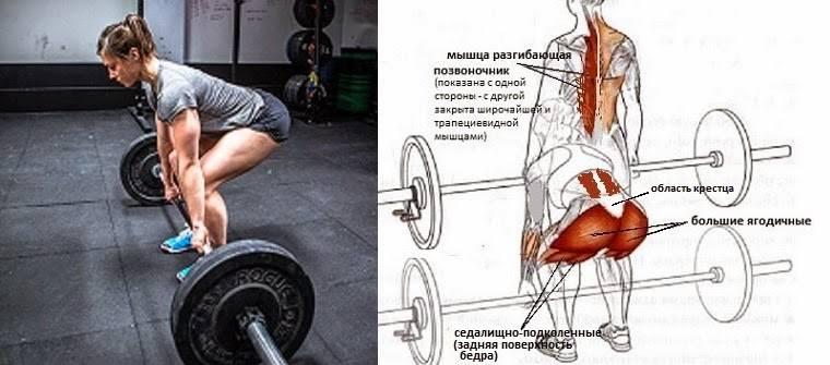 Становая тяга в стиле сумо: техника выполнения, какие мышцы работают