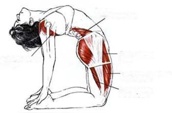 Подвздошно-поясничная мышца: где находится, эффективные упражнения на ее растяжку - tony.ru