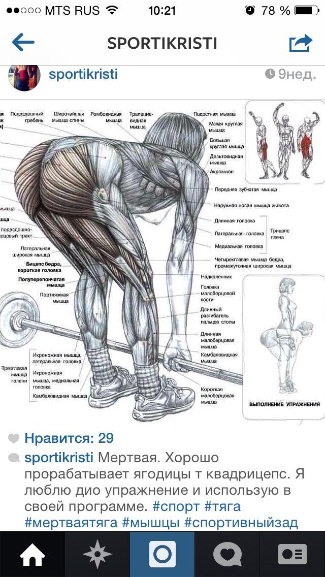 Тренировка для верхней части тела (руки, плечи, грудь, живот, спина): программа для новичков (день 4)