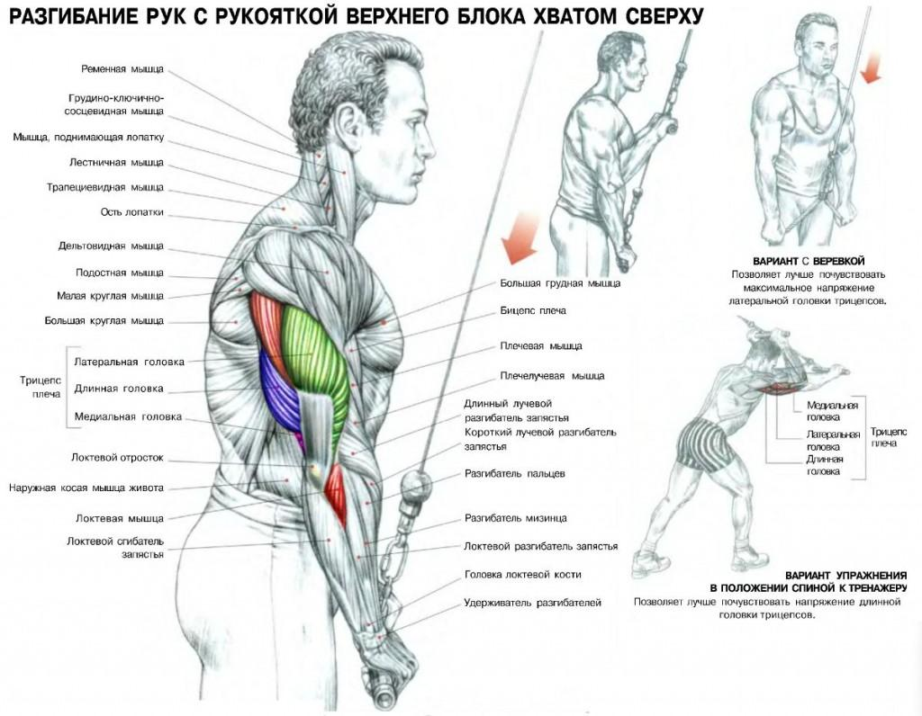 Программа тренировок грудь бицепс