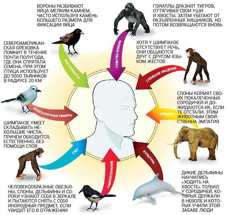 Разум животных. есть ли у зверей язык и мышление? - полонсил.ру - социальная сеть здоровья - медиаплатформа миртесен