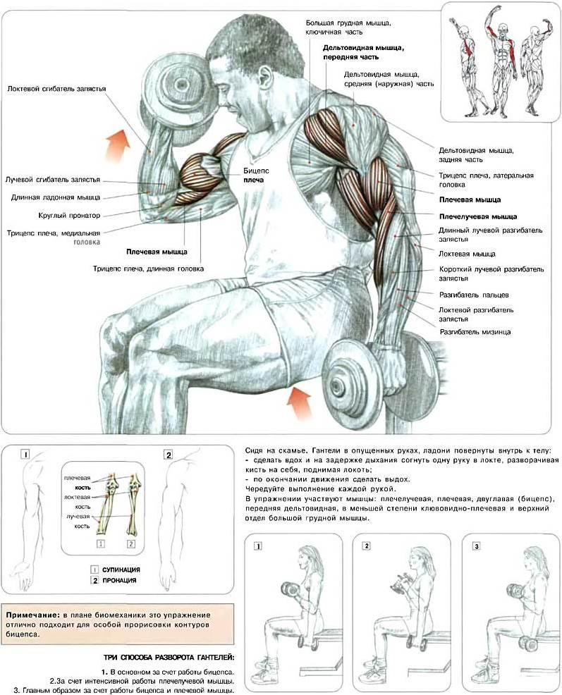 10 упражнений на бицепс для тренажерного зала