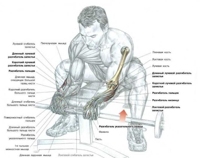 Тренировка бицепса и трицепса: тройной штурм