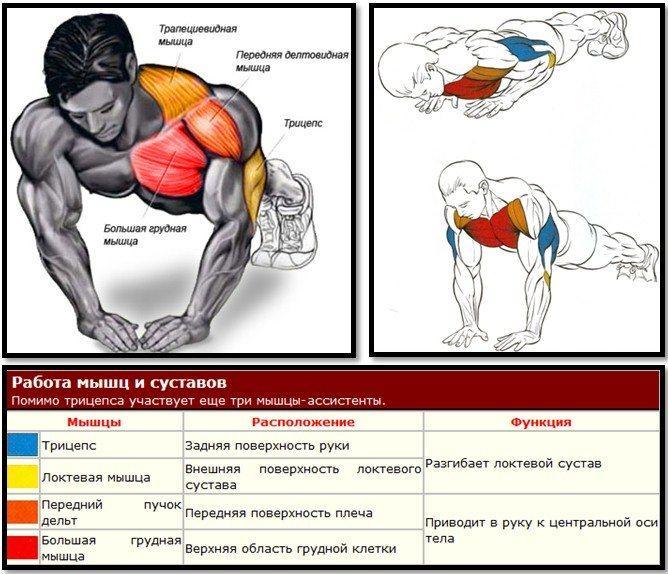 Польза и вред отжиманий, какие мышцы работают, виды, техника, схемы