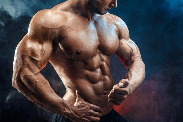 Большая ягодичная и портяжная мышцы - самая большая и длинная мышца в теле человека