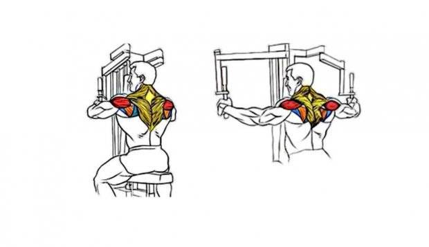 Сведение рук в тренажере бабочка