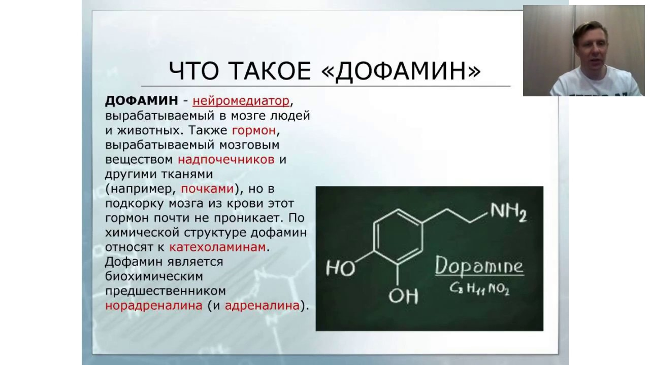 Дофамин: где вырабатывается, механизм действия и функции