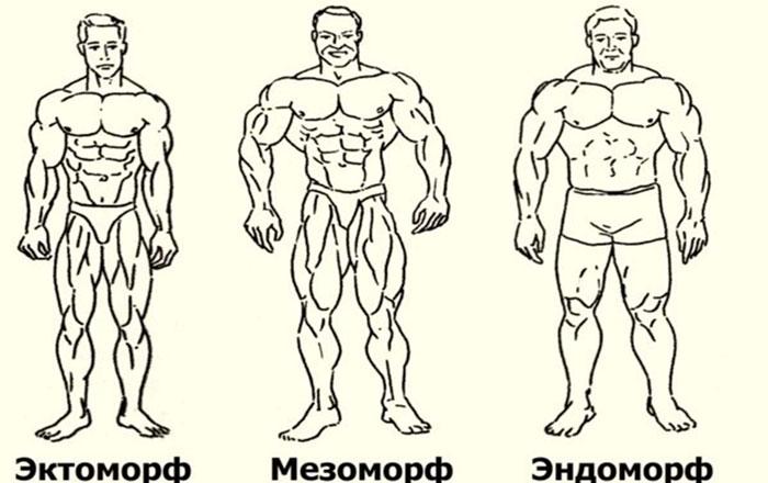 Кто ты: эндоморф, мезоморф или эктоморф?