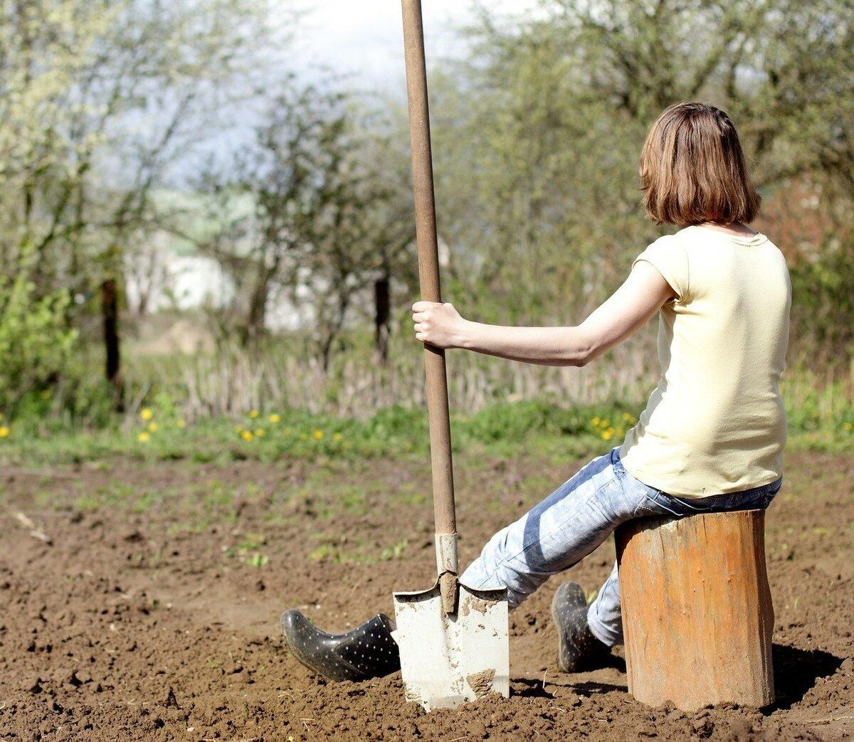 Топ советов для ленивого огорода – что можно не делать на даче — agroxxi