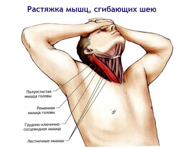 Растяжение икроножной мышцы: симптомы и лечение боли