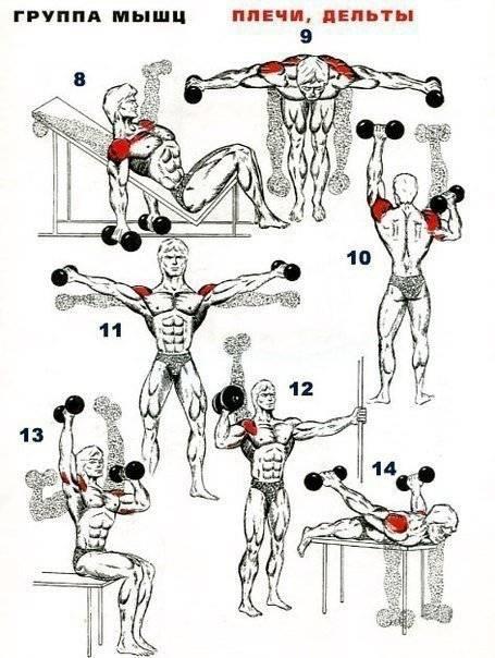 Тренировка ног и плеч в один день