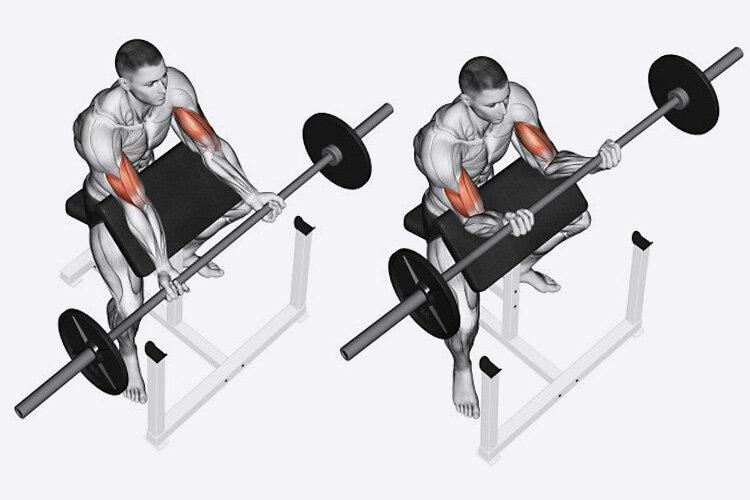 Сгибания рук на скамье скотта со штангой: какие мышцы работают, техника выполнения, видео