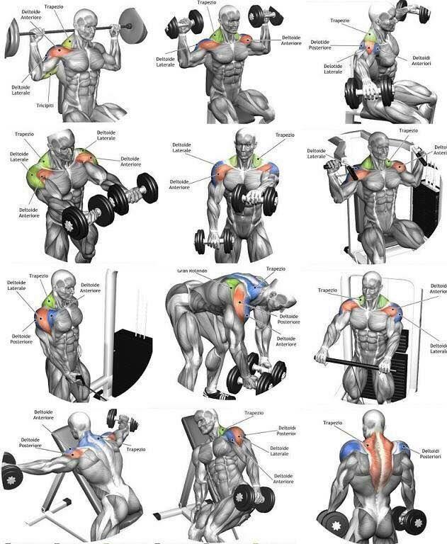 Эффективная программа тренировок для набора мышечной массы мужчинам