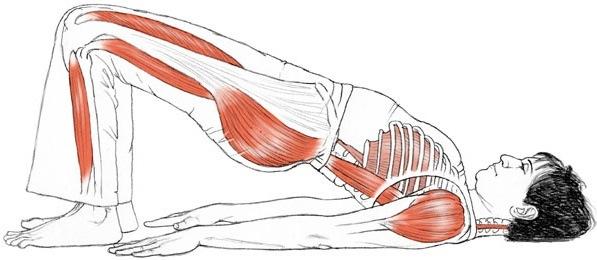Правила растяжки мышц или будьте осторожны!