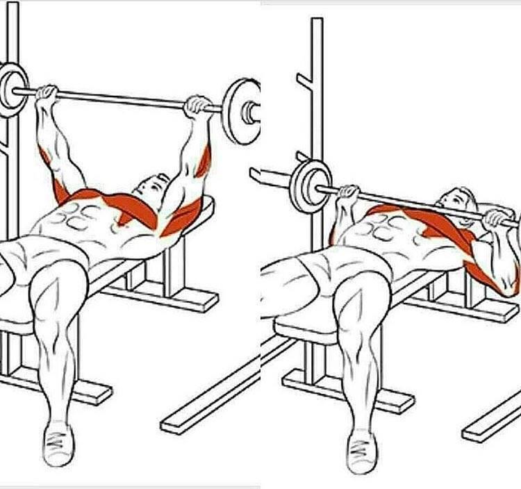 Жим штанги на наклонной скамье: техника выполнения, какие мышцы работают