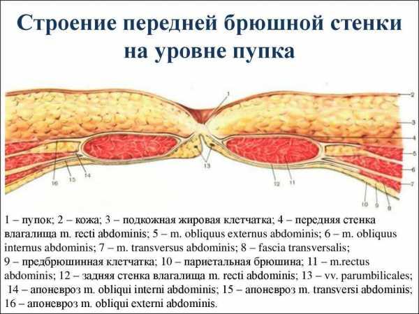 Желудок: где находится и как болит у человека, фото, строение и функции