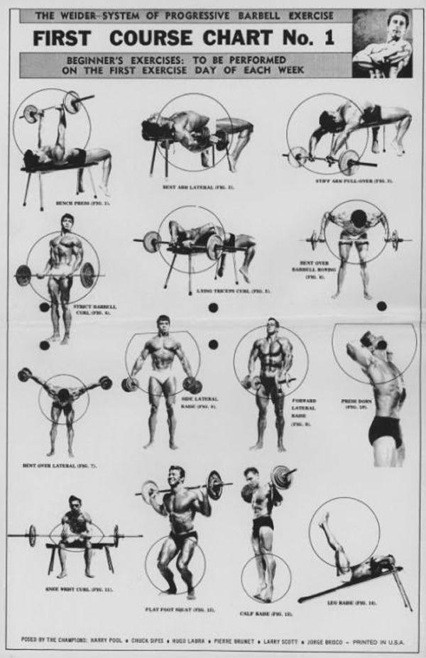 Тренировки дома для девушек на все группы мышц: самые эффективные комплексы упражнений