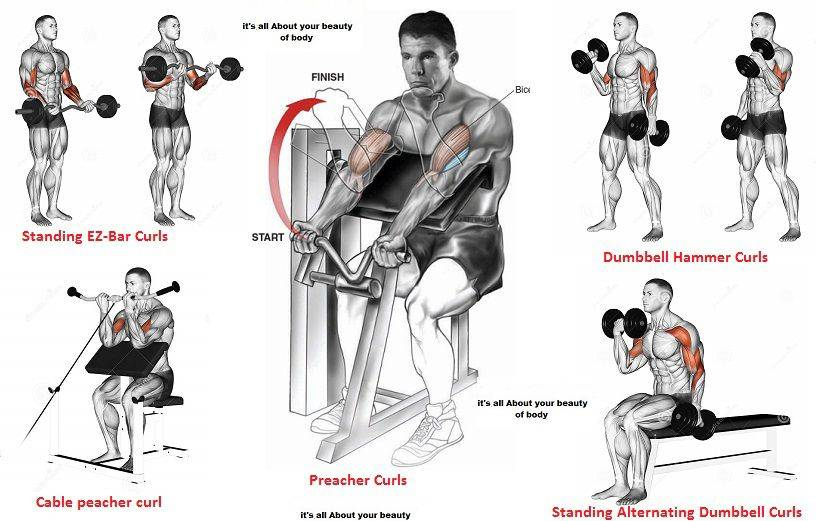 Упражнения на бицепс в тренажерном зале