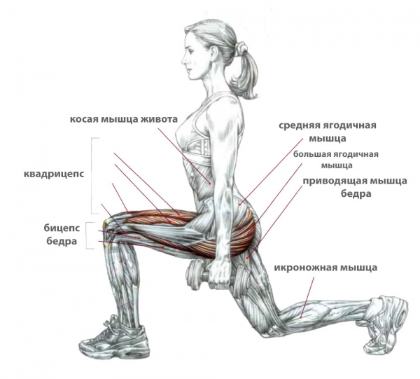 Болгарские приседания (выпады): вариации упражнения и техника выполнения сплит приседа | rulebody.ru — правила тела