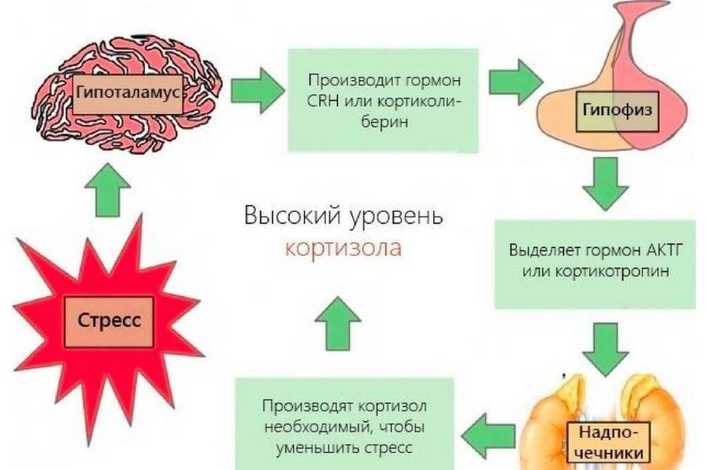 Какие гормоны выделяются при испытании сильного стресса