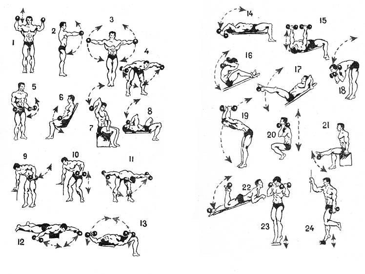 Программы тренировок в тренажерном зале