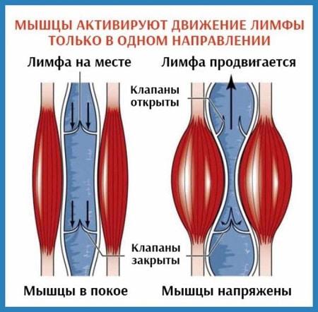 Бубновский - комплекс упражнений для позвоночника в домашних условиях - твой суставчик