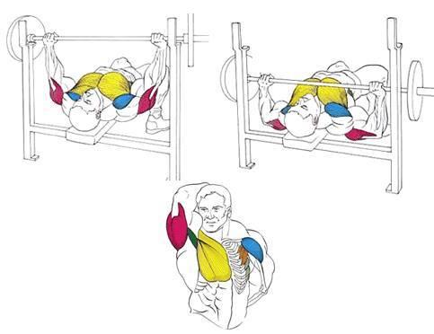 Жим гантелей лежа на наклонной (под углом) и горизонтальной скамье: техника выполнения, виды и программы