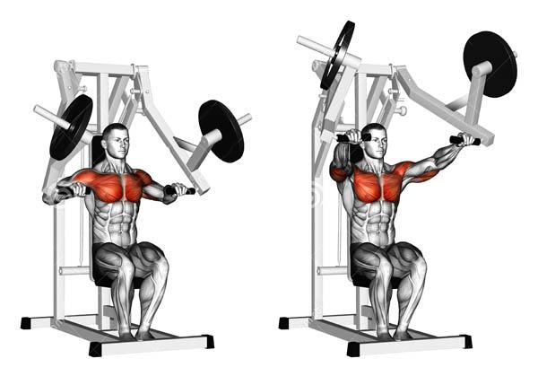 Упражнения на плечи в тренажерном зале: комплекс упражнений, особенности выполнения - tony.ru