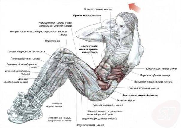 Косые мышцы живота: как накачать боковой пресс