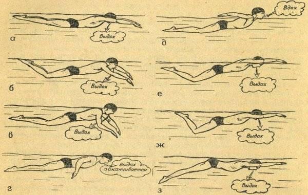 Как научиться плавать баттерфляем самостоятельно: упражнения в воде и на суше, уроки для обучения дельфину, программы тренировок
