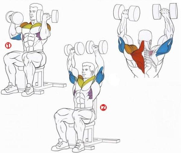 Правильная техника выполнения жима арнольда, какие работают мышцы?