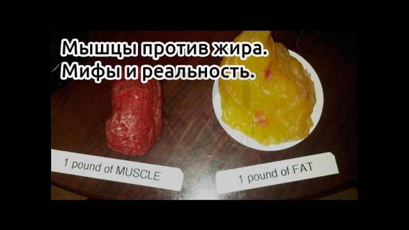 Как эффективнее набирать мышцы и жечь жир на дефиците калорий