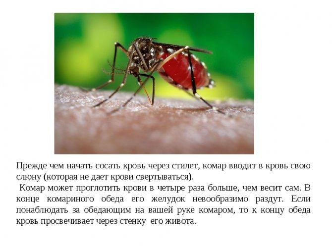 Группа крови привлекающая комаров
