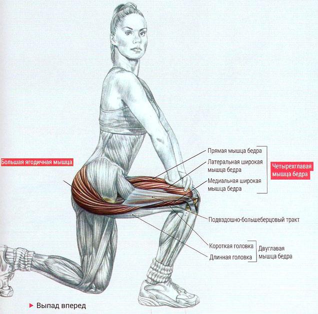 Как накачать ягодицы и можно ли сделать это за неделю, месяц: как правильно приседать и какие упражнения надо делать для накачивания большой и малой ягодичной мышцы