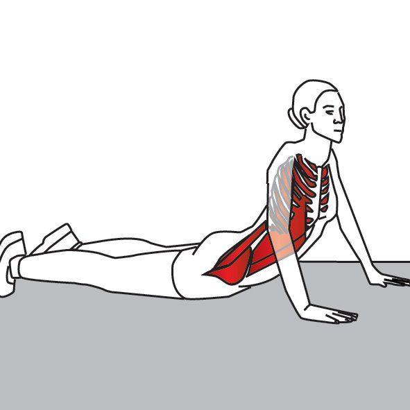 Подвздошно-поясничная мышца - что это и где она находится