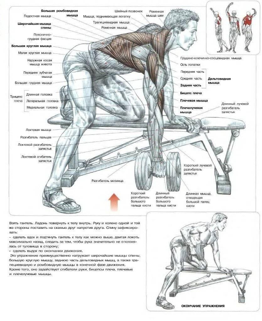 Лучшие комплексы упражнений с гантелями для мужчин в домашних условиях на все группы мышц