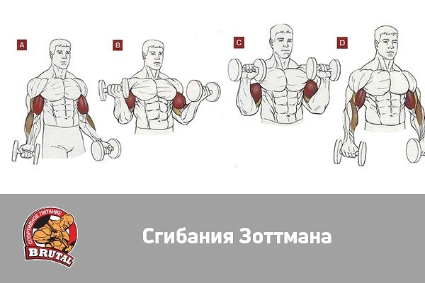 Сгибания зоттмана - активируем плечелучеву мышцу