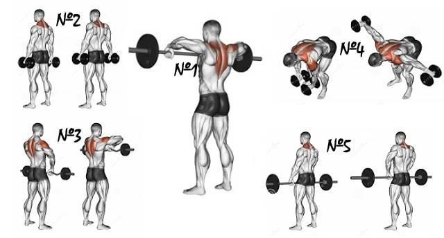 Как эффективно развить трапециевидную мышцу