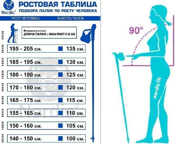 Какие палки для скандинавской ходьбы лучше? как правильно выбрать финские палки для ходьбы?