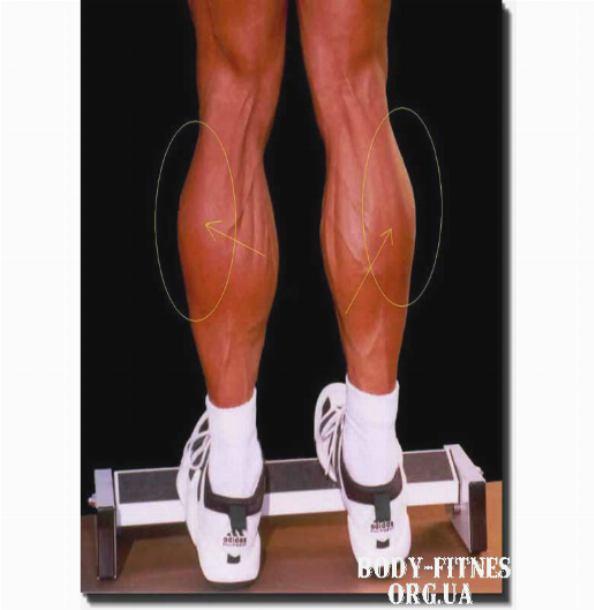 Икроножные мышцы: как накачать икры в домашних условиях и тренажерном зале