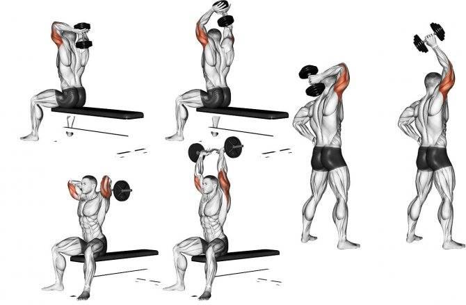 Упражнения для развития и укрепления мышц рук без гантелей