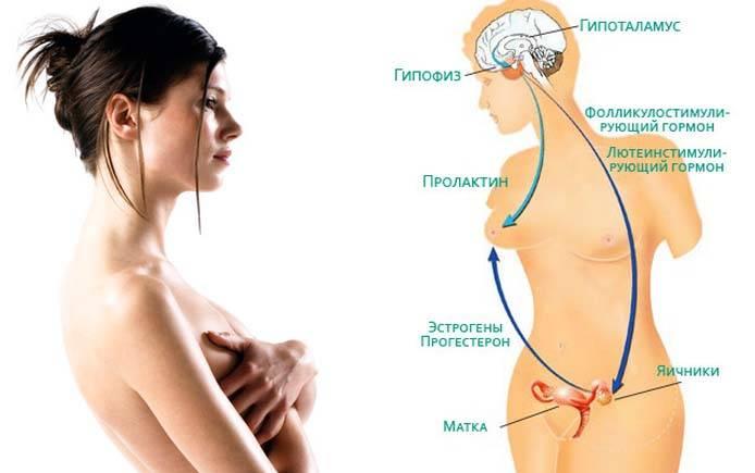 Гормон пролактин: что это такое, какая норма у женщин по возрасту и циклу, какие причины повышения?