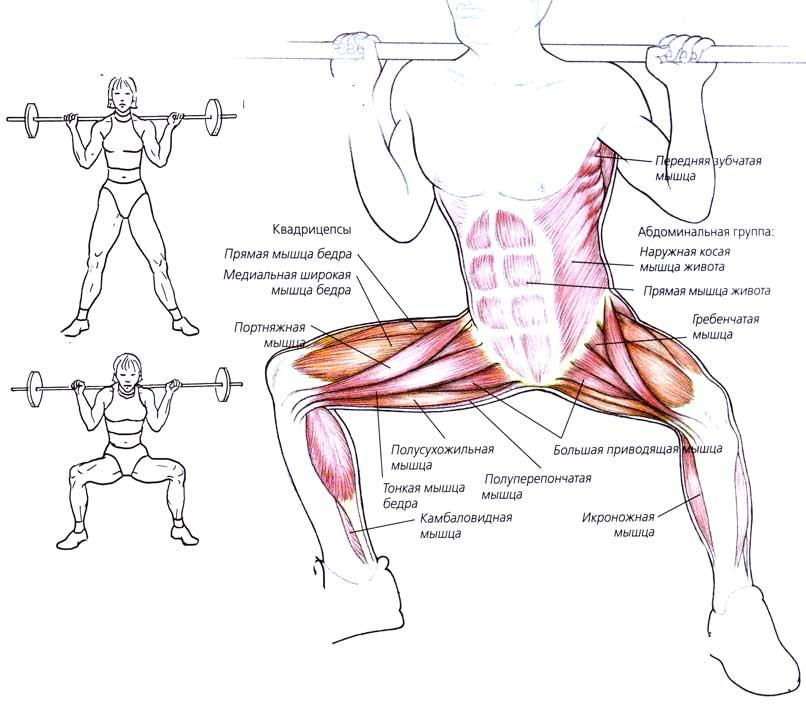 Приседания плие со штангой: видео и фото упражнения