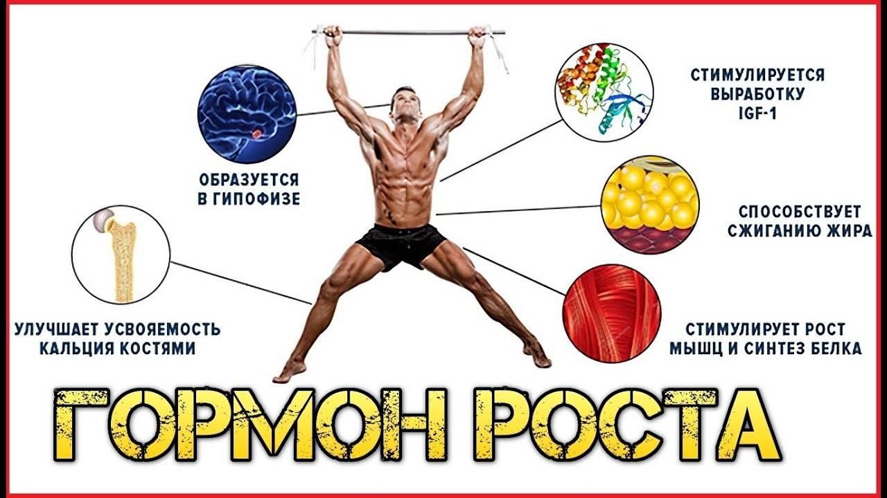 Гормоны роста. как повысит естественную выработку гормона роста. | фитнес для похудения