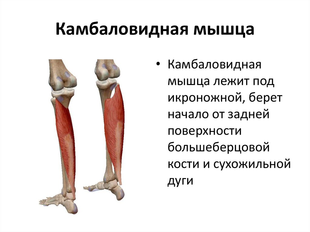 Как накачать икры ног: комплекс упражнений для тренировки икроножных мышц   rulebody.ru — правила тела