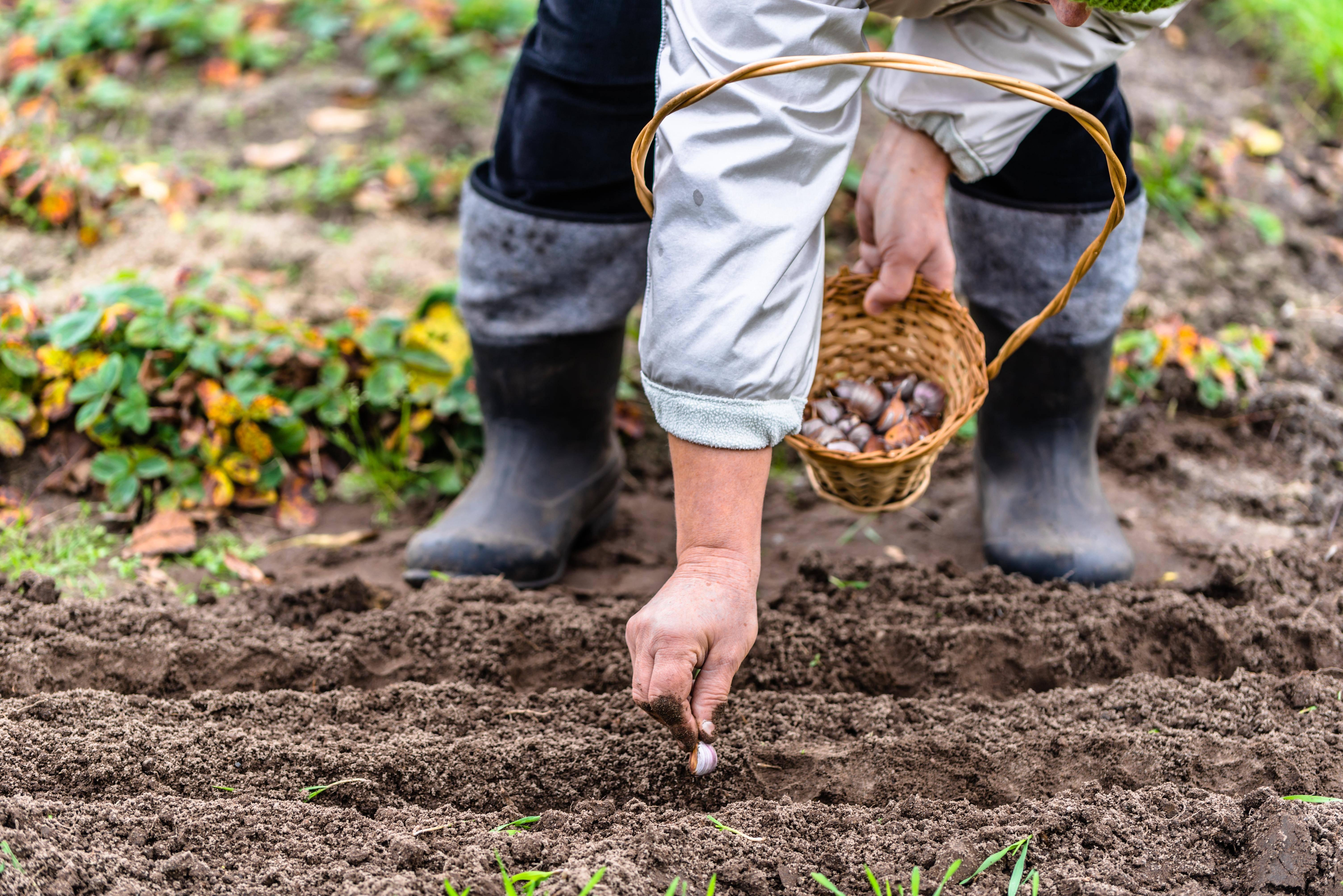 Вместо фитнеса: можно ли считать работу в саду тренировкой?