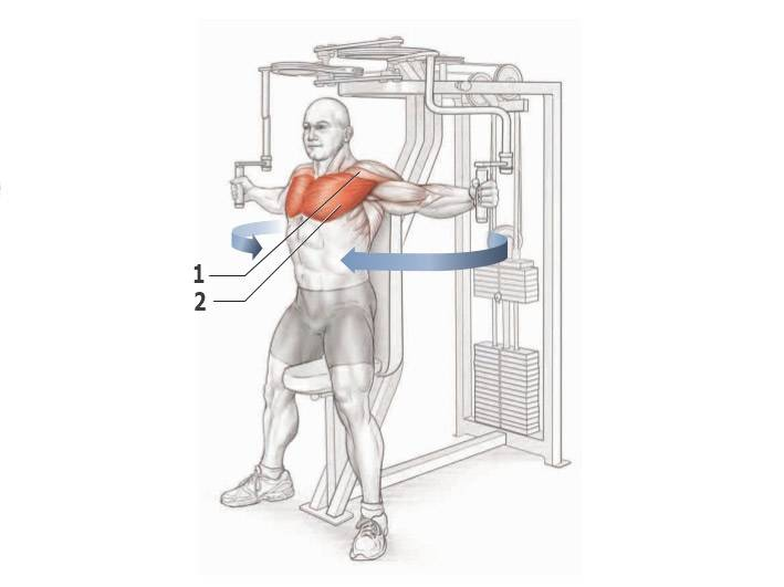 Сведение рук в кроссовере: техника выполнения через верхние и нижние блоки