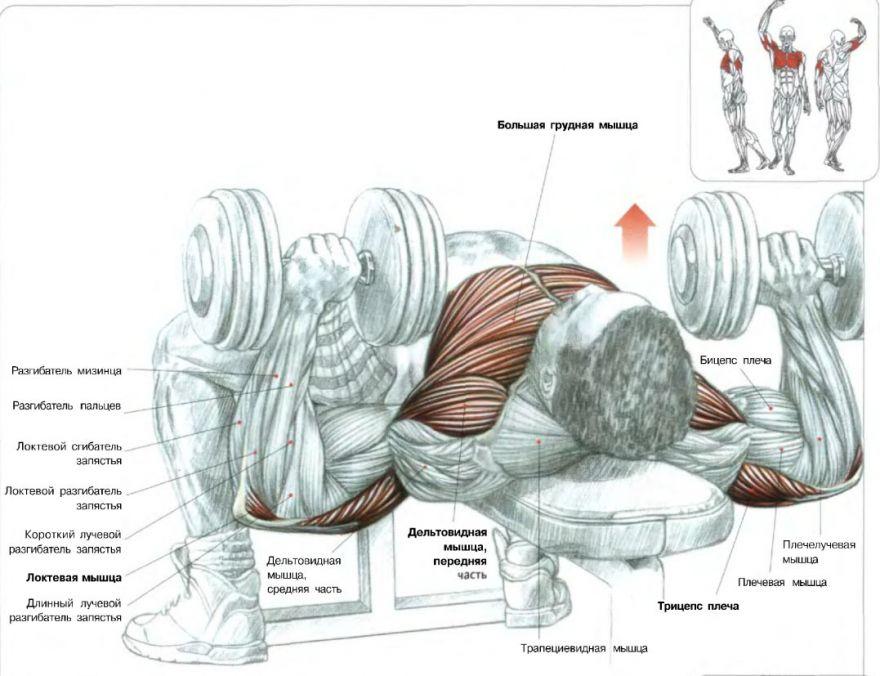 Как быстро накачаться. сильный рост мышц!